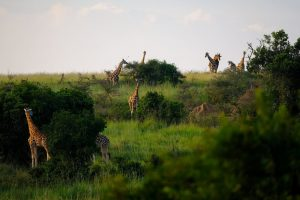 5 things you need to do to prepare for a safari holiday